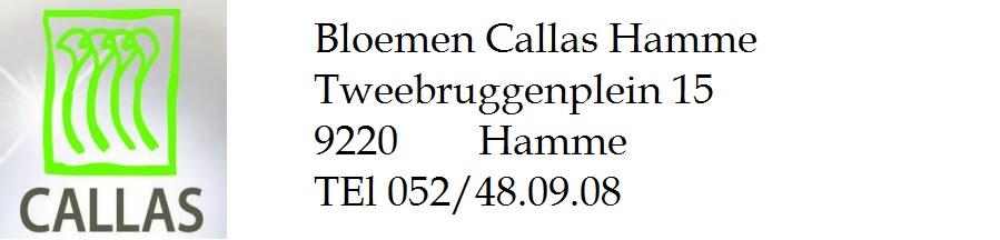 Bloemen Callas